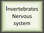 Invertebrates nervous system