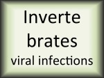 Invertebrates viral infections
