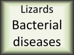 Lizards Bacterial diseases