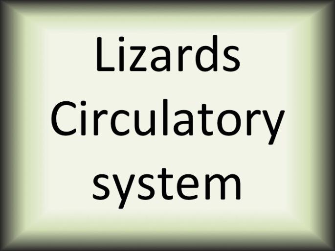 Lizards circ