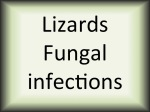 Lizards fungal infections