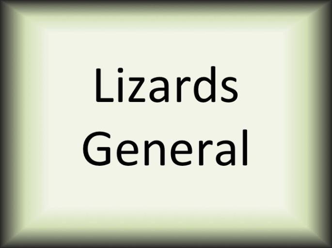 Lizards General