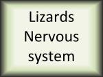 Lizards nervous system