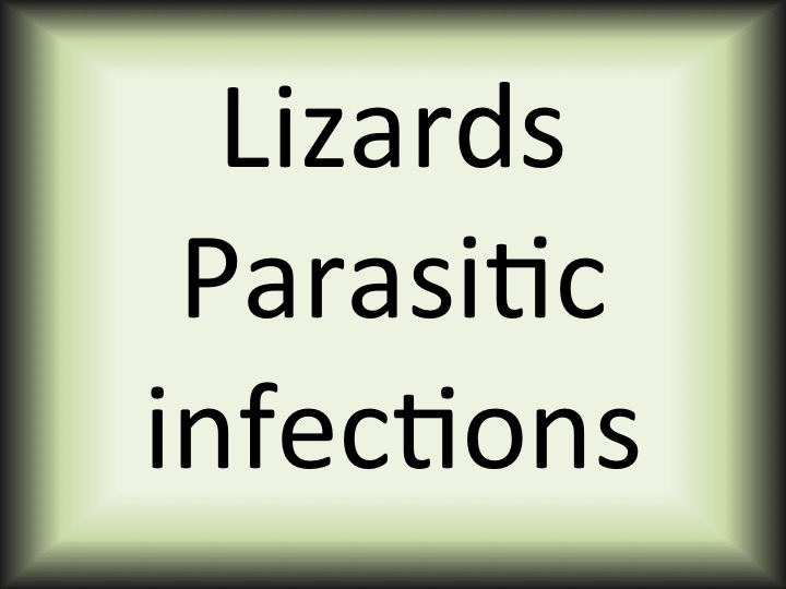 Lizards parasitic infections