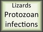 Lizards protozoan infections