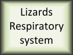 Lizards respiratory system