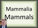 Mammalia mammals