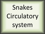 Snakes circulatory system