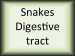 Snakes digestive tract