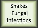 Snakes fungal infections