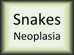 Snakes neoplasia