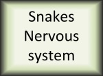 Snakes nervous system