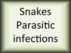 Snakes parasitic infections