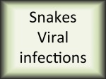 Snakes viral infections