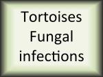 Tortoises Fungal infections