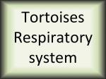 Tortoises respiratory system