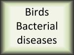 Birds bacterial diseases