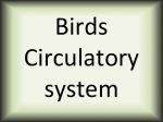 Birds circulatory system