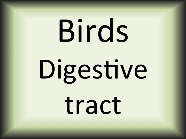 Birds digestive tract