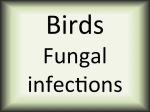 Birds fungal infections