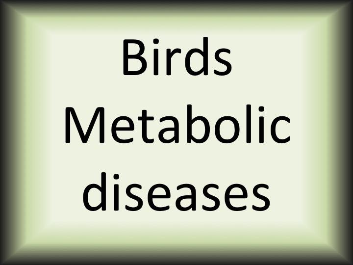 Birds Metabolic diseases