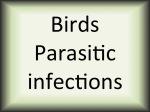 Birds parasitic diseases