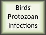 Birds protozoan infections