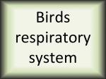 Birds respiratory system