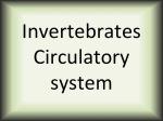 Invertebrates Circulatory system