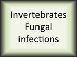 Invertebrates fungal infections