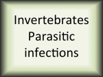 Invertebrates parasitic infections