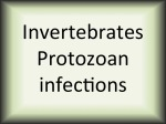 Invertebrates Protozoan infections
