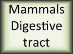 Mammals digestive tract
