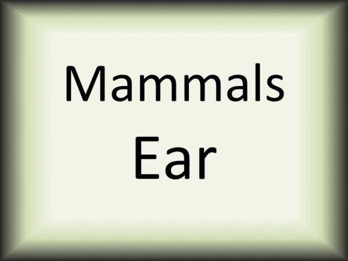 Mammals Ear