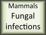 Mammals Fungal infections