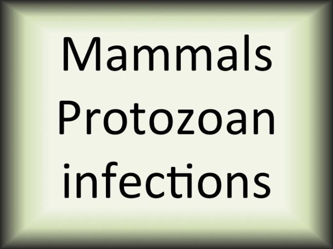 Mammals protozoan diseases