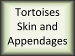 Tortoises skin and append