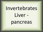 Invertebrates Liver-pancreas
