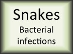 Snakes bacterial infections
