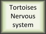 Tortoises nervous system