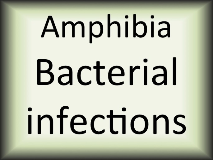 Amphibia bacterial infections