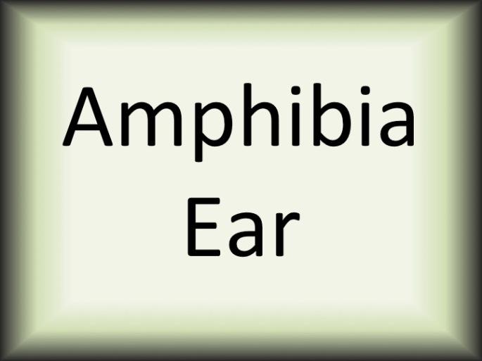 Amphibia ear