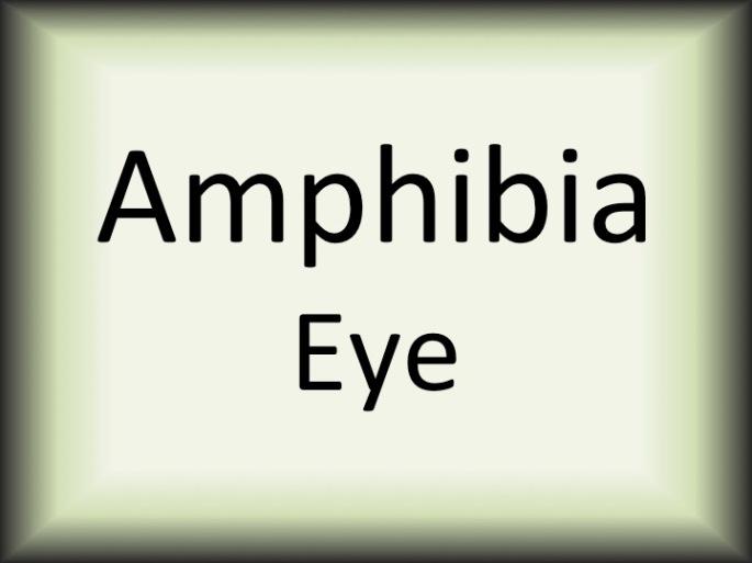Amphibia Eye