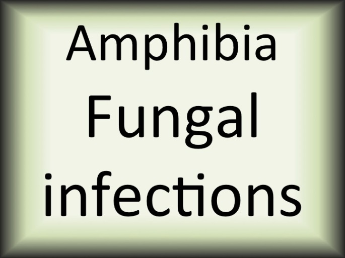 Amphibia fungal infections