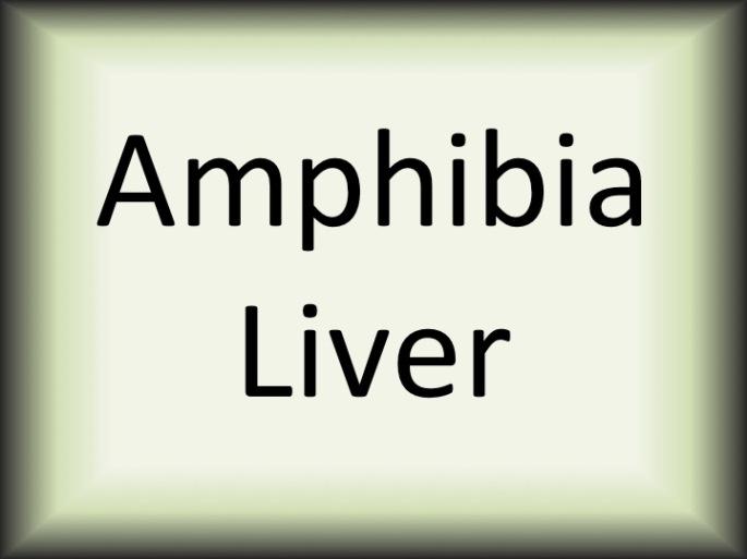 Amphibia liver