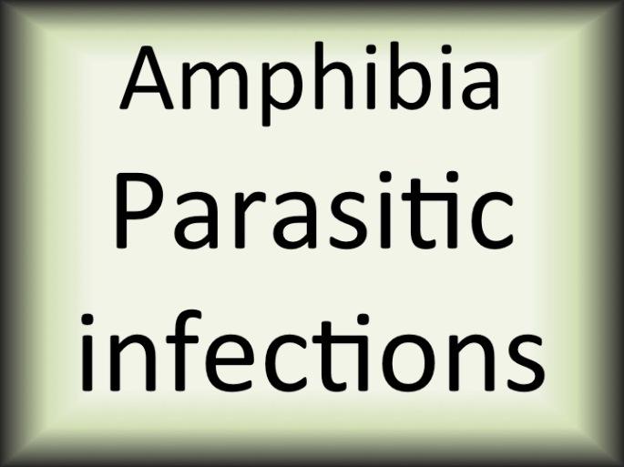 Amphibia parasitic diseases.jpg