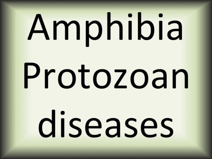 Amphibia protozoan diseases