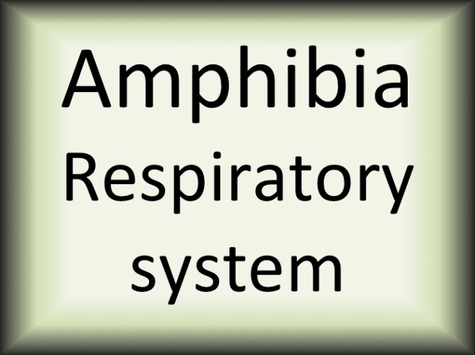 Amphibia respiratory sytem