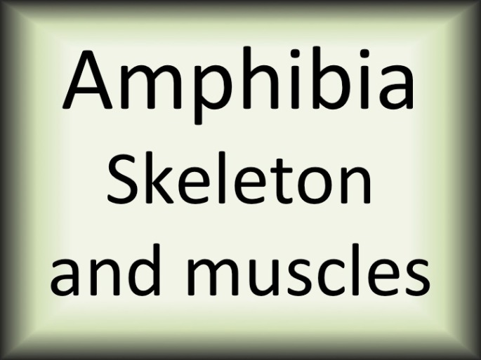 Amphibia skeleton and muscles