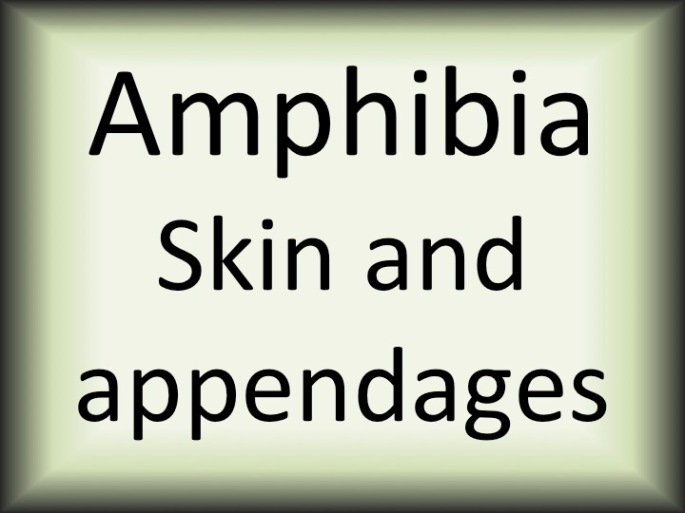 Amphibia skin and appendages